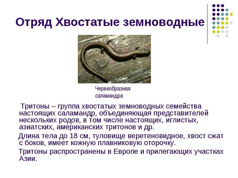Отряд Хвостатые земноводные Тритоны – группа хвостатых земноводных семейства ...