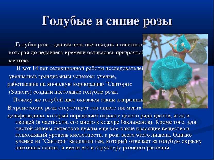 Голубые и синие розы Голубая роза - давняя цель цветоводов и генетиков, котор...