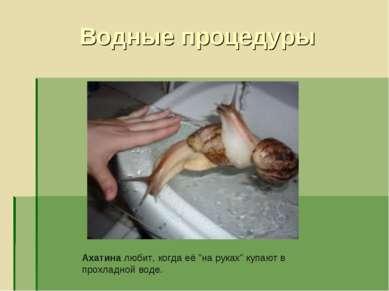 """Водные процедуры Ахатина любит, когда её """"на руках"""" купают в прохладной воде."""