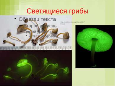 Светящиеся грибы http://weblinks.ru/blog/interest/2470.html