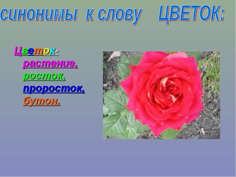 Цветок- растение, росток, проросток, бутон.