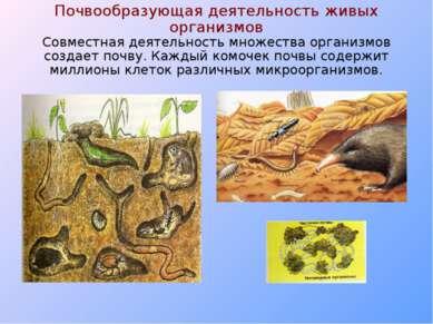 Почвообразующая деятельность живых организмов Совместная деятельность множест...