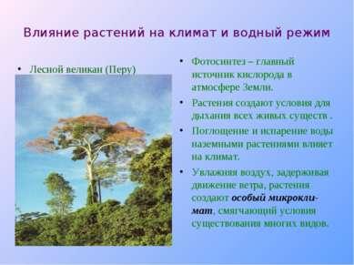 Влияние растений на климат и водный режим Лесной великан (Перу) Фотосинтез – ...
