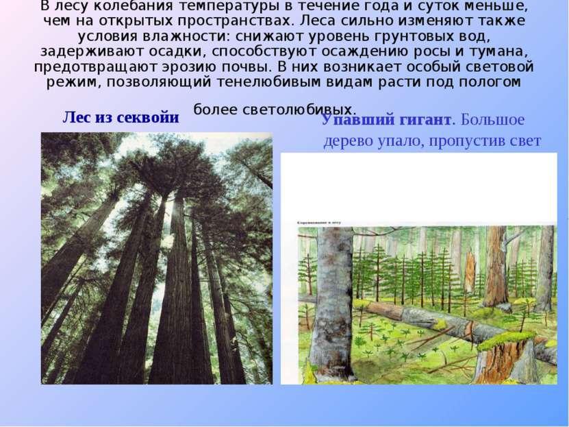 В лесу колебания температуры в течение года и суток меньше, чем на открытых п...