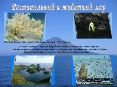 Растительность разнообразна, более 100 видов. Северные острова – заросли кедр...