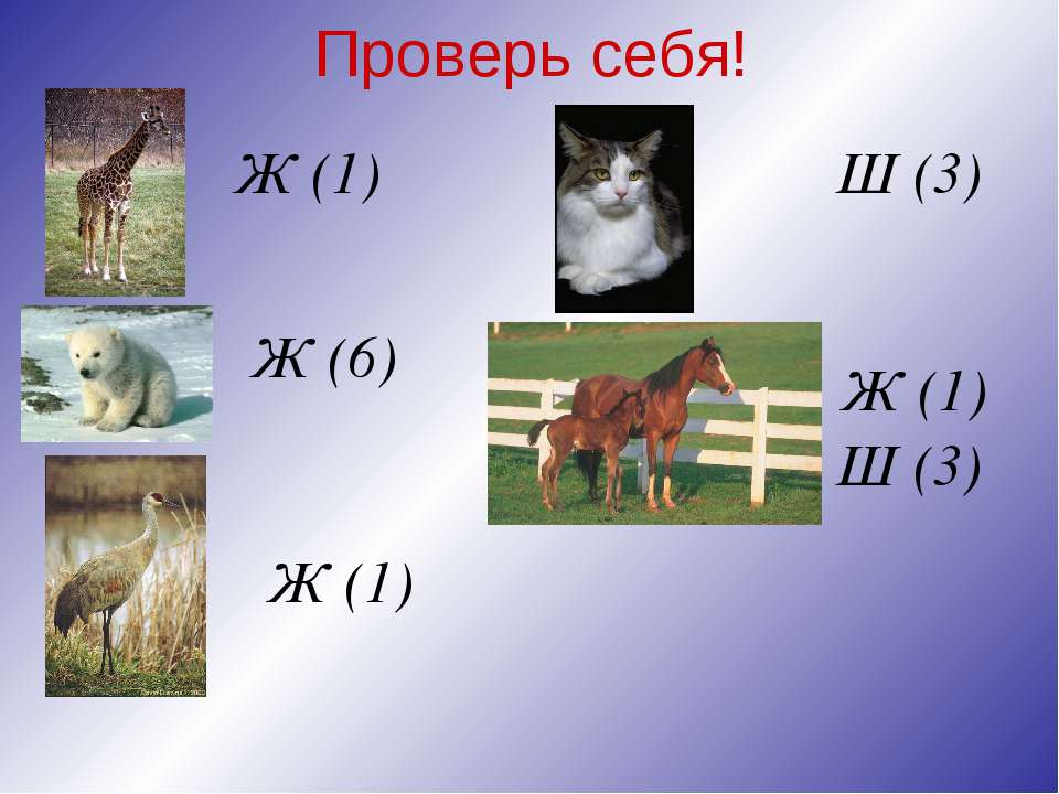 Проверь себя! Ж (1) Ж (6) Ж (1) Ж (1) Ш (3) Ш (3)