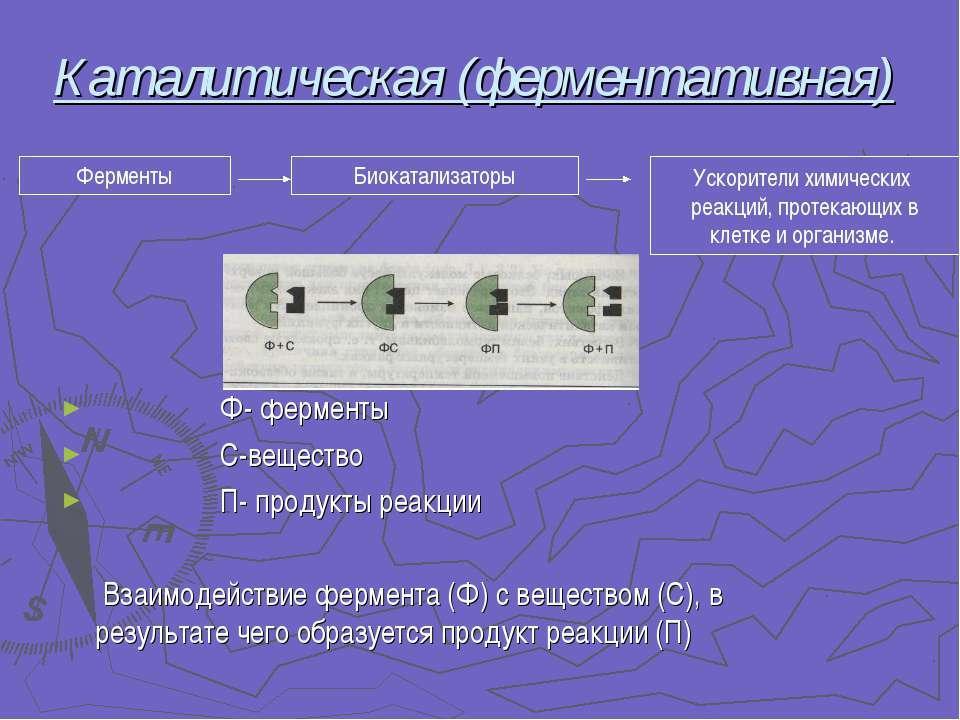 Каталитическая (ферментативная) Ф- ферменты С-вещество П- продукты реакции Вз...