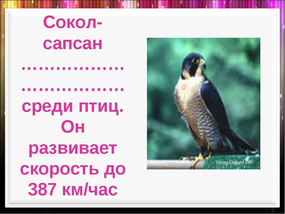 Сокол-сапсан ………………………………среди птиц. Он развивает скорость до 387 км/час
