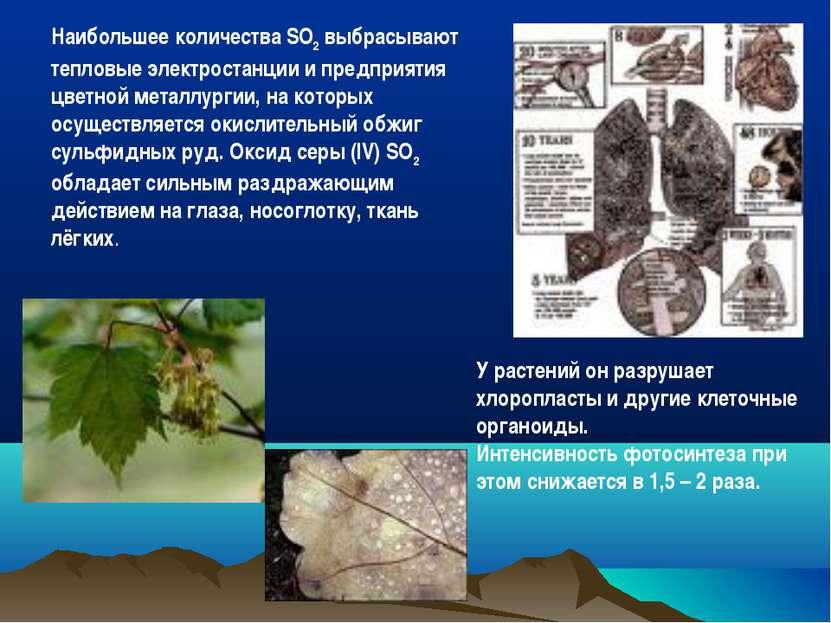 презентация проблемы связанные с животноводческими технологиями