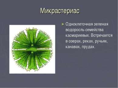 Микрастериас Одноклеточная зеленая водоросль семейства касмариевых. Встречает...