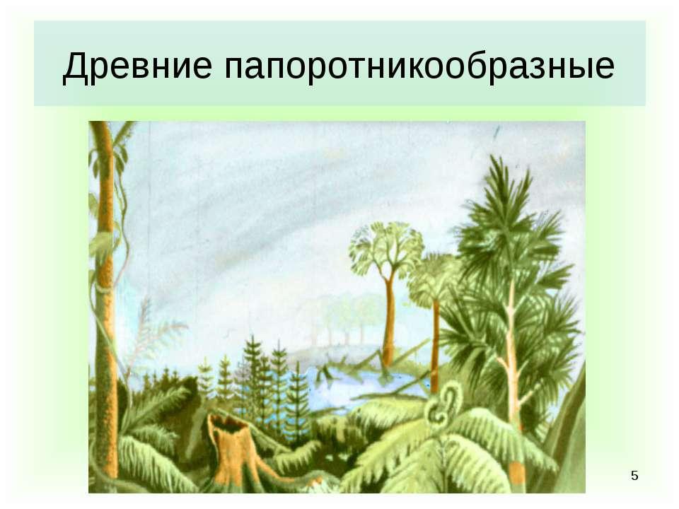 * Древние папоротникообразные