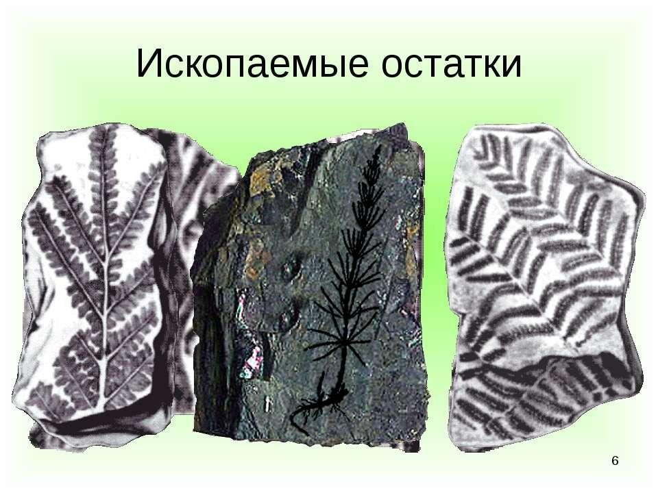 * Ископаемые остатки