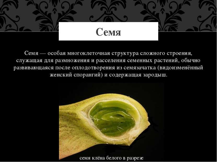 Семя — особая многоклеточная структура сложного строения, служащая для размно...