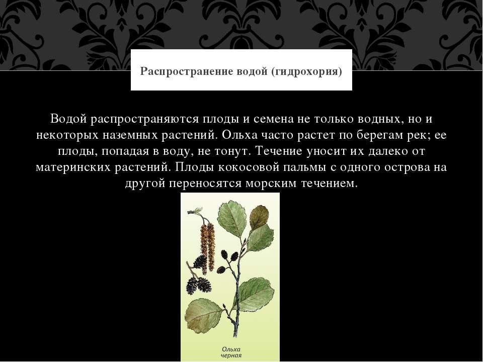 Водой распространяются плоды и семена не только водных, но и некоторых наземн...
