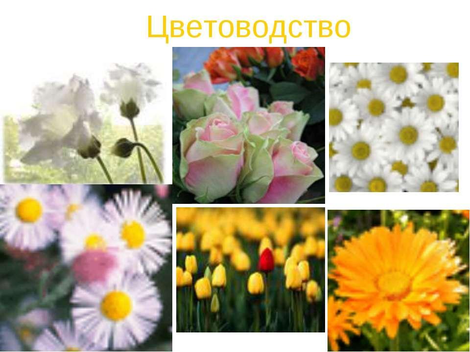 Цветоводство