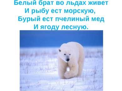 Белый брат во льдах живет И рыбу ест морскую, Бурый ест пчелиный мед И ягоду ...