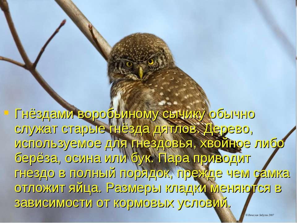 Гнёздами воробьиному сычику обычно служат старые гнёзда дятлов. Дерево, испол...