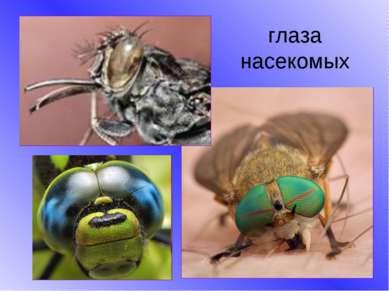 глаза насекомых