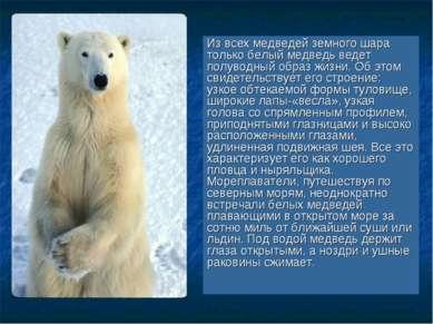 Из всех медведей земного шара только белый медведь ведет полуводный образ жиз...