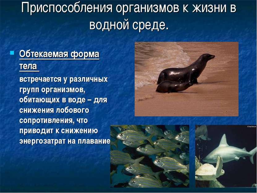 Приспособления организмов к жизни в водной среде. Обтекаемая форма тела встре...