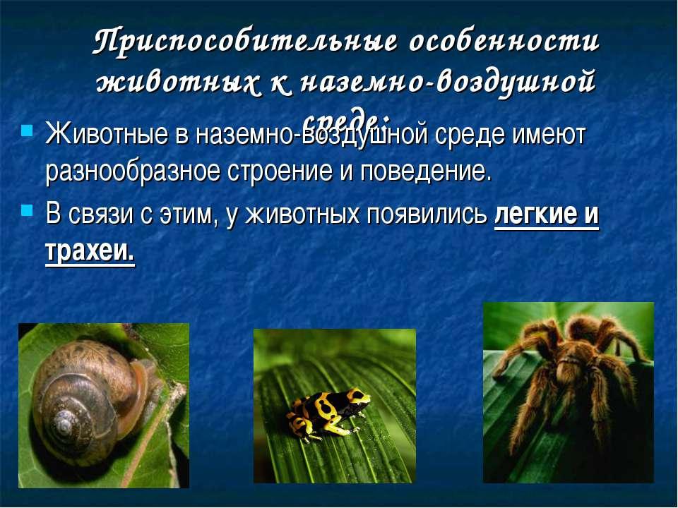 Приспособительные особенности животных к наземно-воздушной среде: Животные в ...