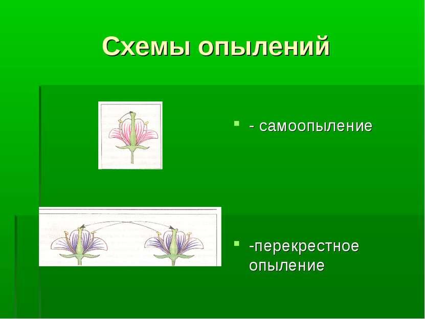Схемы опылений - самоопыление -перекрестное опыление