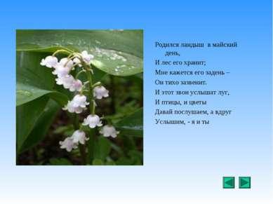 Родился ландыш в майский день, И лес его хранит; Мне кажется его задень – Он ...