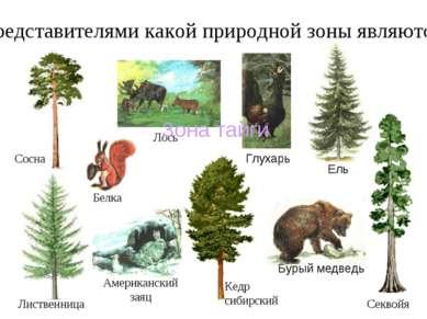 Лиственница Кедр сибирский Представителями какой природной зоны являются: Сос...