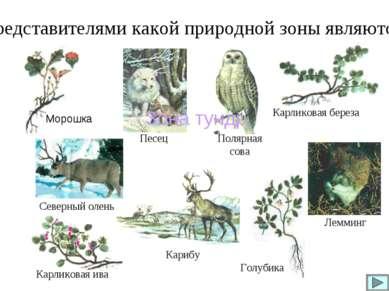 Карликовая береза Карликовая ива Голубика Представителями какой природной зон...