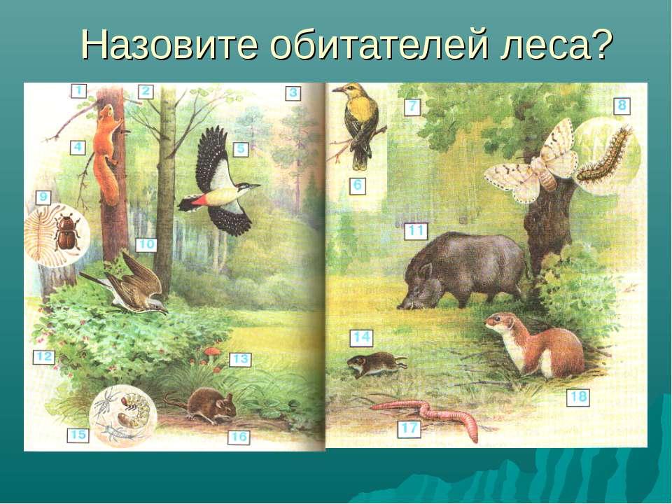 Назовите обитателей леса?