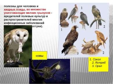 полезны для человека и хищные птицы, во множестве уничтожающие мелких грызуно...