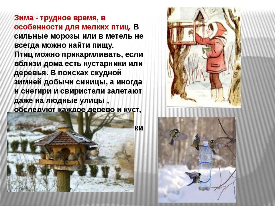 Зима - трудное время, в особенности для мелких птиц. В сильные морозы или в м...