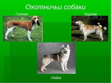Охотничьи собаки Гончая Борзая Лайка