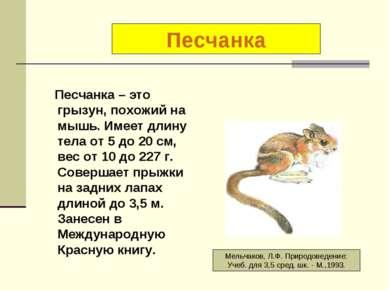 Песчанка – это грызун, похожий на мышь. Имеет длину тела от 5 до 20 см, вес о...