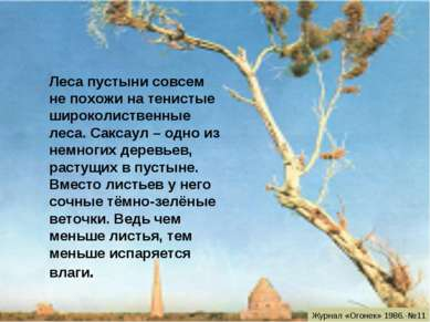 Леса пустыни совсем не похожи на тенистые широколиственные леса. Саксаул – од...