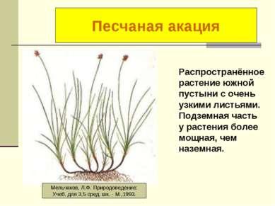 Осока короткостолбиковая Распространённое растение южной пустыни с очень узки...