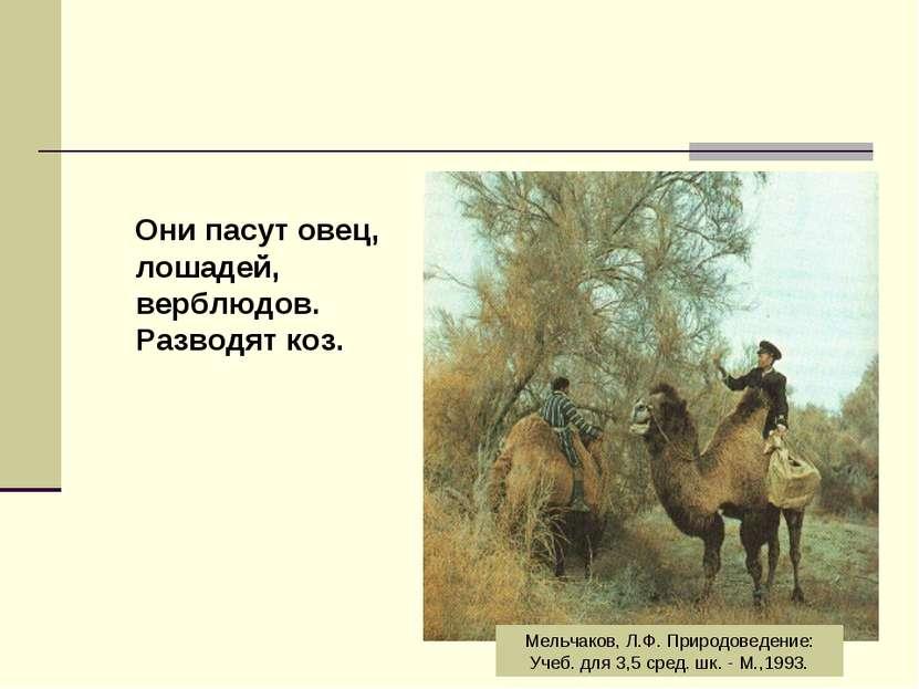 Они пасут овец, лошадей, верблюдов. Разводят коз. Мельчаков, Л.Ф. Природоведе...