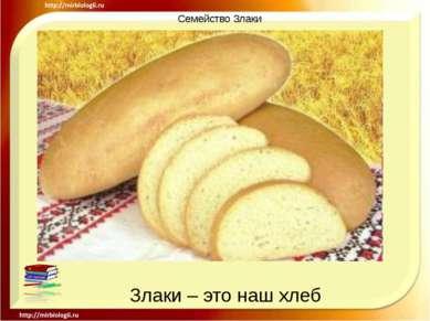 Семейство Злаки Злаки – это наш хлеб
