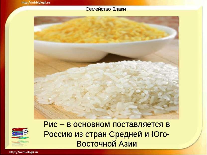 Семейство Злаки Рис – в основном поставляется в Россию из стран Средней и Юго...