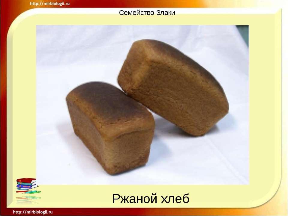 Семейство Злаки Ржаной хлеб