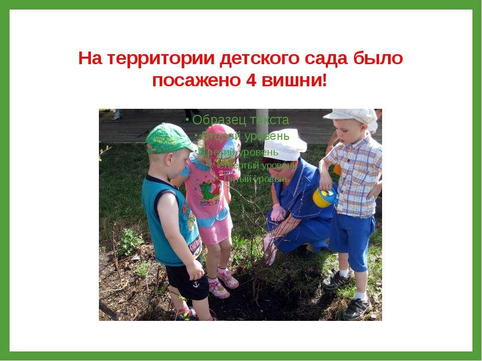 На территории детского сада было посажено 4 вишни!