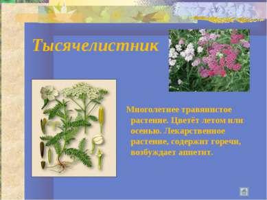 Тысячелистник Многолетнее травянистое растение. Цветёт летом или осенью. Лека...