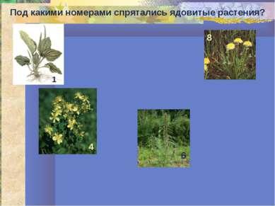 Под какими номерами спрятались ядовитые растения? 1 4 6 8