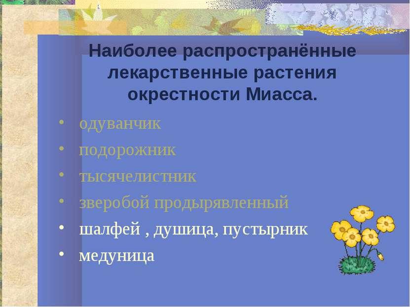 Наиболее распространённые лекарственные растения окрестности Миасса. одуванчи...
