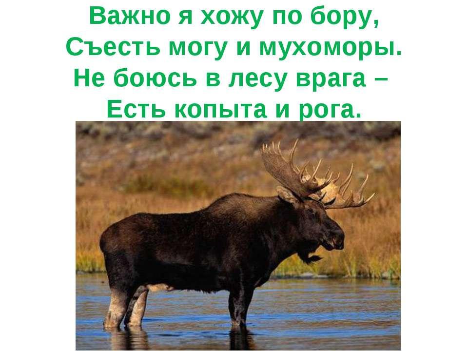 Важно я хожу по бору, Съесть могу и мухоморы. Не боюсь в лесу врага – Есть ко...