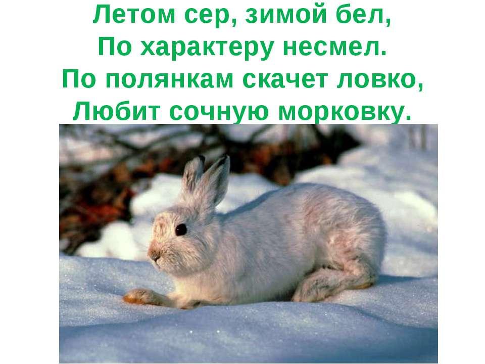 Летом сер, зимой бел, По характеру несмел. По полянкам скачет ловко, Любит со...