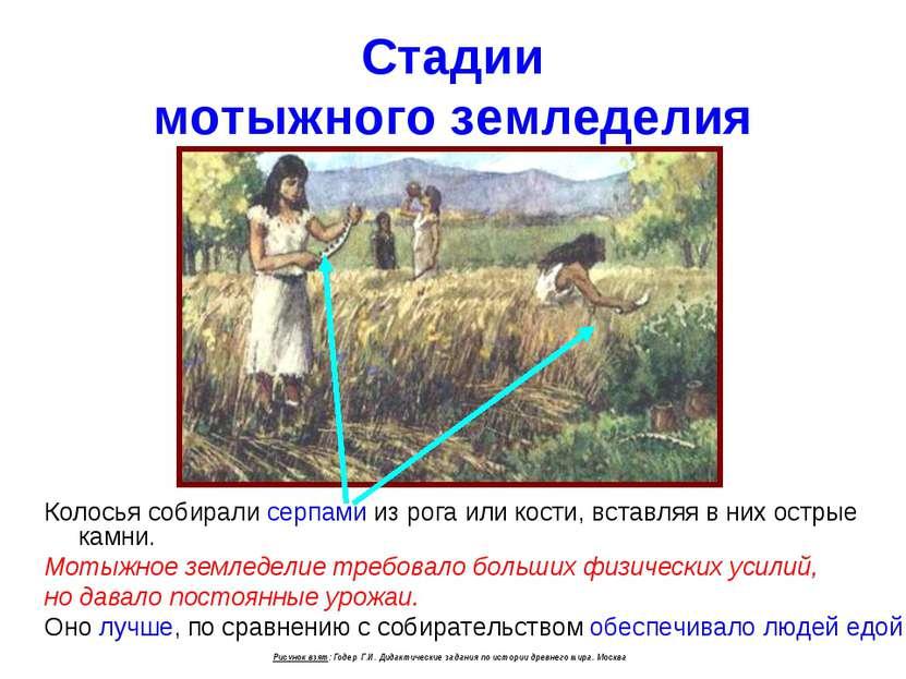 Стадии мотыжного земледелия Колосья собирали серпами из рога или кости, встав...