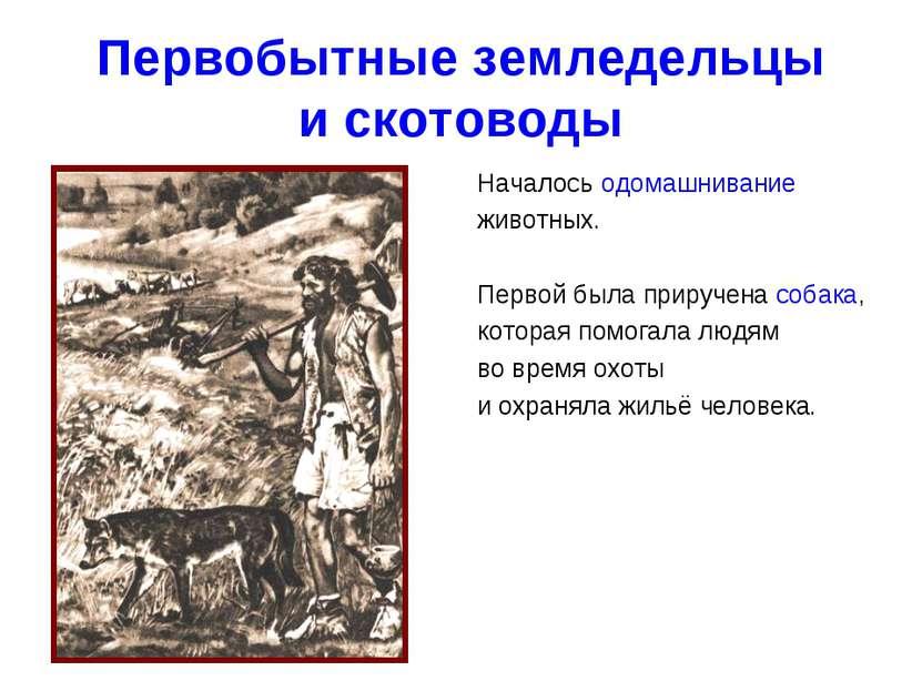 Первобытные земледельцы и скотоводы Началось одомашнивание животных. Первой б...