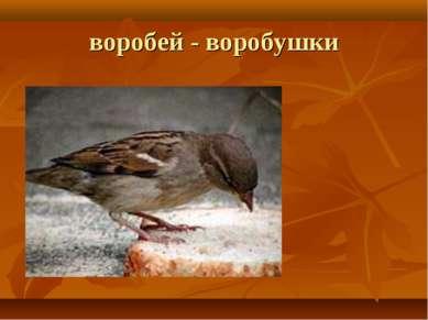 воробей - воробушки