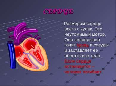 СЕРДЦЕ Размером сердце всего с кулак. Это неутомимый мотор. Оно непрерывно го...
